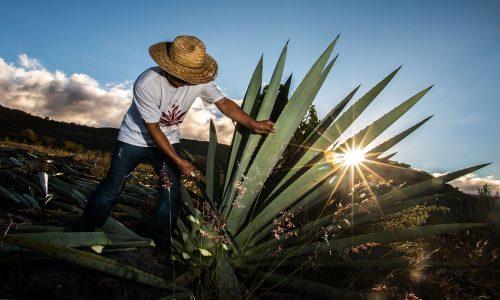 La Escondida Mezcal – Time to Share