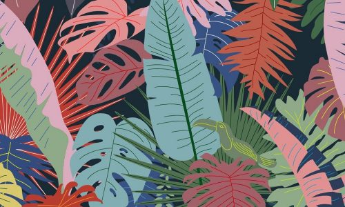 Panama Social, Perth – Neotropical, Colourful and Flavourful